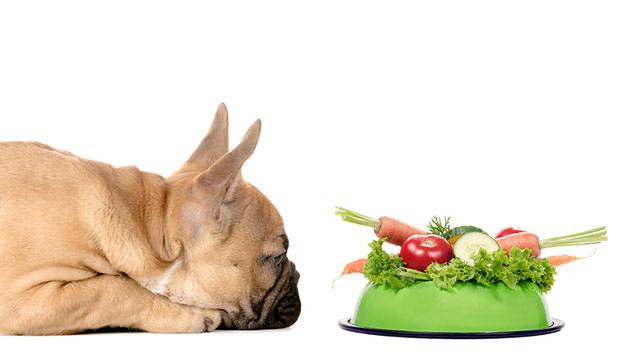 Major Benefits of feeding your dog Natural Choice Treats
